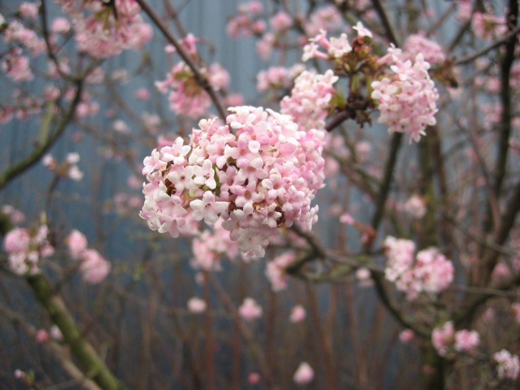 spring-1478889
