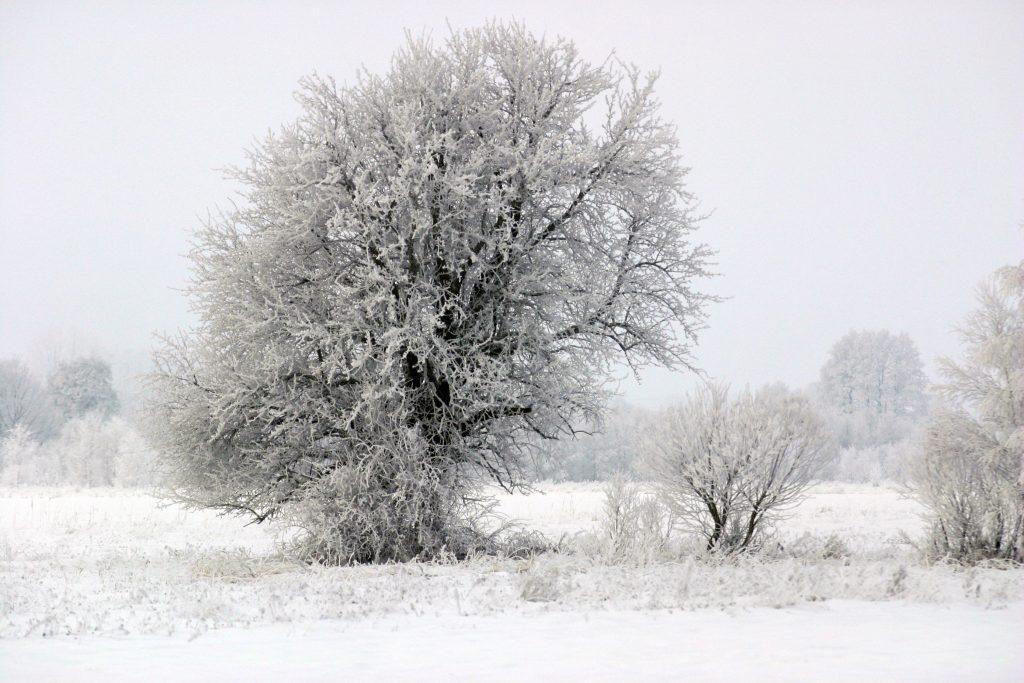 winter-1405418