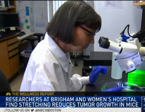 NBC Features Dr. Langevin for Research on Stretching Reduces Tumor Growth in Mouse Model